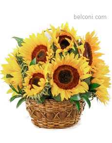 Flower Basket 09